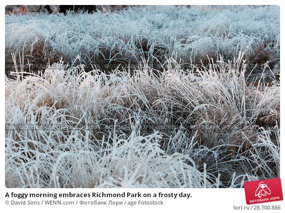 Купить «A foggy morning embraces Richmond Park on a frosty day. Featuring: Atmosphere Where: London, United Kingdom When: 29 Dec 2016 Credit: David Sims/WENN.com», фото № 28700886, снято 29 декабря 2016 г. (c) age Fotostock / Фотобанк Лори