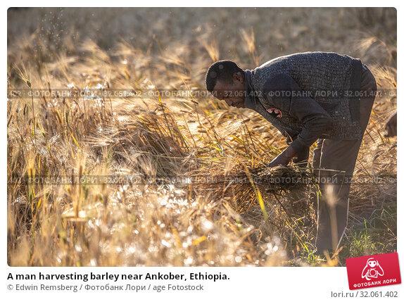 A man harvesting barley near Ankober, Ethiopia. (2019 год). Редакционное фото, фотограф Edwin Remsberg / age Fotostock / Фотобанк Лори