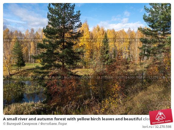 Купить «A small river and autumn forest with yellow birch leaves and beautiful clouds», фото № 32270598, снято 5 октября 2019 г. (c) Валерий Смирнов / Фотобанк Лори
