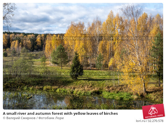 Купить «A small river and autumn forest with yellow leaves of birches», фото № 32270578, снято 5 октября 2019 г. (c) Валерий Смирнов / Фотобанк Лори