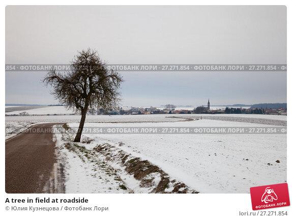 Купить «A tree in field at roadside», фото № 27271854, снято 7 января 2017 г. (c) Юлия Кузнецова / Фотобанк Лори