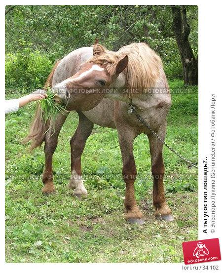 А ты угостил лошадь?.., фото № 34102, снято 29 июня 2017 г. (c) Элеонора Лукина (GenuineLera) / Фотобанк Лори
