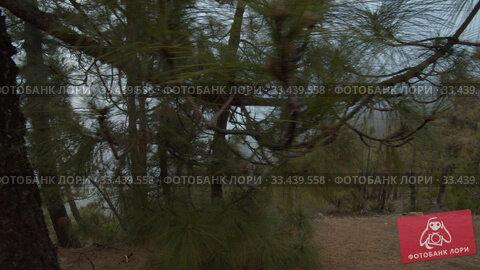 Купить «A view on a misty slope between pine trunks», видеоролик № 33439558, снято 28 января 2020 г. (c) Данил Руденко / Фотобанк Лори