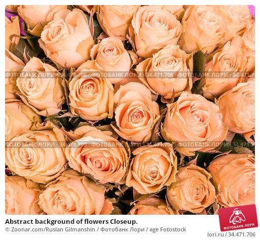 Abstract background of flowers Closeup. Стоковое фото, фотограф Zoonar.com/Ruslan Gilmanshin / age Fotostock / Фотобанк Лори