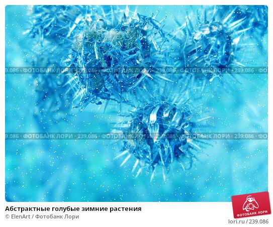 Абстрактные голубые зимние растения, иллюстрация № 239086 (c) ElenArt / Фотобанк Лори