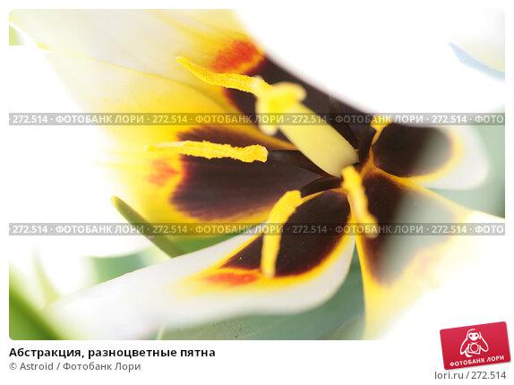 Купить «Абстракция, разноцветные пятна», фото № 272514, снято 29 апреля 2008 г. (c) Astroid / Фотобанк Лори