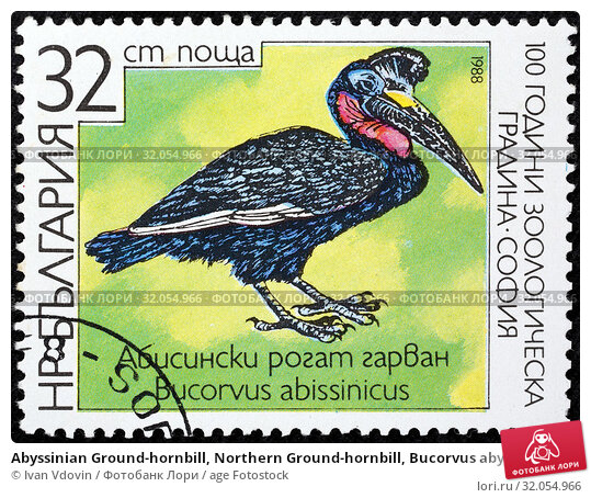 Abyssinian Ground-hornbill, Northern Ground-hornbill, Bucorvus abyssinicus, postage stamp, Bulgaria, 1988. (2014 год). Редакционное фото, фотограф Ivan Vdovin / age Fotostock / Фотобанк Лори