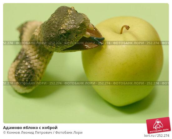 Адамово яблоко с коброй, фото № 252274, снято 15 апреля 2008 г. (c) Коннов Леонид Петрович / Фотобанк Лори