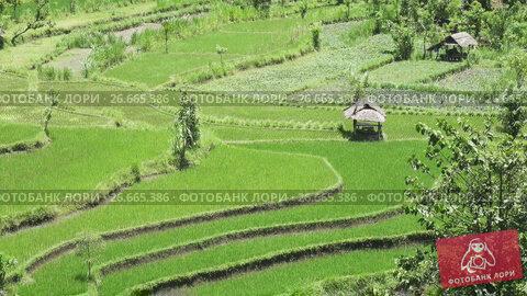 Купить «Aero view on rice terraces of mountain and house of farmers. Bali, Indonesia», видеоролик № 26665386, снято 15 июля 2009 г. (c) Куликов Константин / Фотобанк Лори