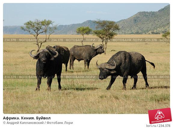 Африка. Кения. Буйвол, фото № 234378, снято 15 февраля 2005 г. (c) Андрей Каплановский / Фотобанк Лори