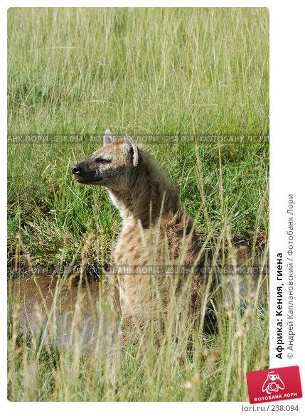 Африка: Кения, гиена, фото № 238094, снято 15 февраля 2005 г. (c) Андрей Каплановский / Фотобанк Лори