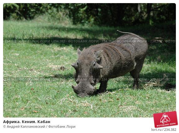 Африка. Кения. Кабан, фото № 234382, снято 12 февраля 2005 г. (c) Андрей Каплановский / Фотобанк Лори