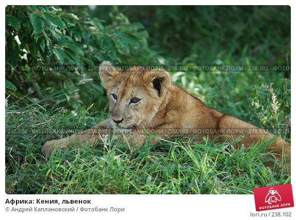 Африка: Кения, львенок, фото № 238102, снято 16 февраля 2005 г. (c) Андрей Каплановский / Фотобанк Лори