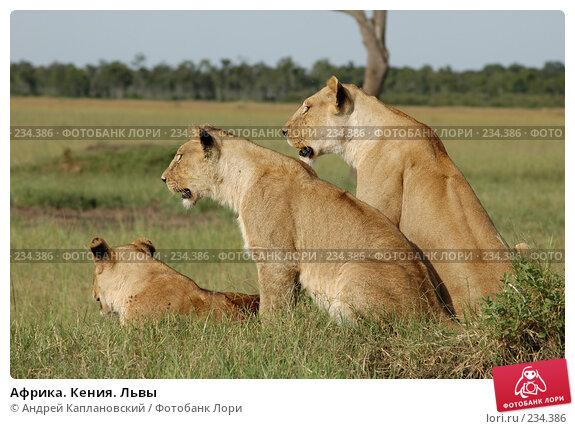 Купить «Африка. Кения. Львы», фото № 234386, снято 12 февраля 2005 г. (c) Андрей Каплановский / Фотобанк Лори