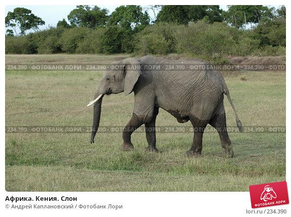 Купить «Африка. Кения. Слон», фото № 234390, снято 12 февраля 2005 г. (c) Андрей Каплановский / Фотобанк Лори