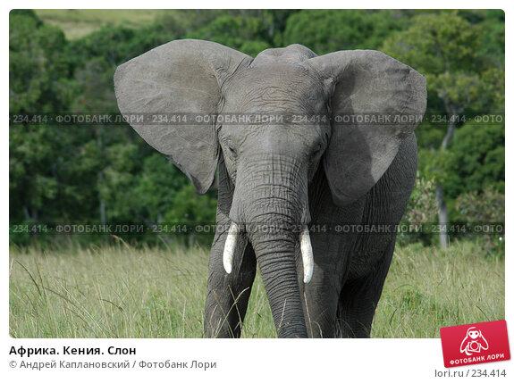 Африка. Кения. Слон, фото № 234414, снято 13 февраля 2005 г. (c) Андрей Каплановский / Фотобанк Лори