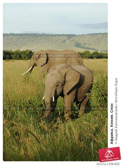 Африка. Кения. Слон, фото № 234422, снято 15 февраля 2005 г. (c) Андрей Каплановский / Фотобанк Лори