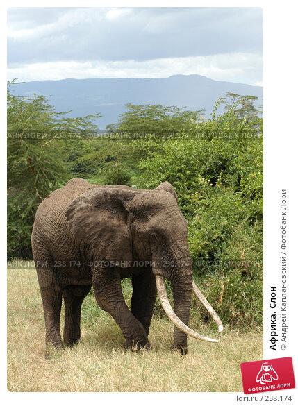 Африка. Слон, фото № 238174, снято 18 февраля 2005 г. (c) Андрей Каплановский / Фотобанк Лори