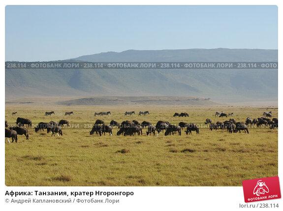 Купить «Африка: Танзания, кратер Нгоронгоро», фото № 238114, снято 18 февраля 2005 г. (c) Андрей Каплановский / Фотобанк Лори
