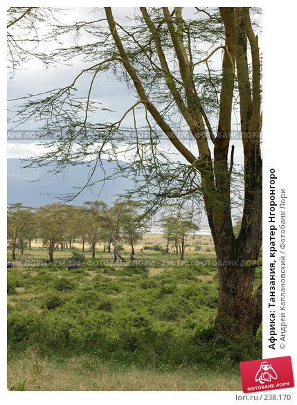 Африка: Танзания, кратер Нгоронгоро, фото № 238170, снято 18 февраля 2005 г. (c) Андрей Каплановский / Фотобанк Лори