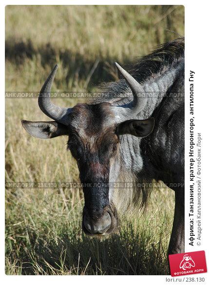 Африка: Танзания, кратер Нгоронгоро, антилопа Гну, фото № 238130, снято 18 февраля 2005 г. (c) Андрей Каплановский / Фотобанк Лори