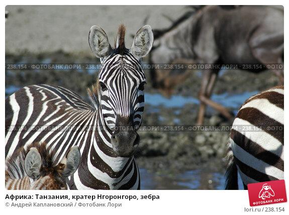 Купить «Африка: Танзания, кратер Нгоронгоро, зебра», фото № 238154, снято 18 февраля 2005 г. (c) Андрей Каплановский / Фотобанк Лори