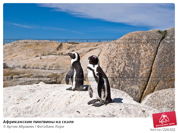 Африканские пингвины на скале, фото № 224022, снято 2 февраля 2008 г. (c) Артем Абрамян / Фотобанк Лори