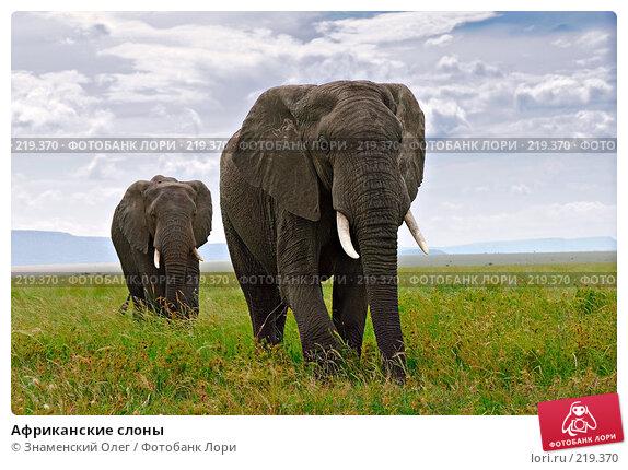 Африканские слоны, фото № 219370, снято 22 января 2008 г. (c) Знаменский Олег / Фотобанк Лори