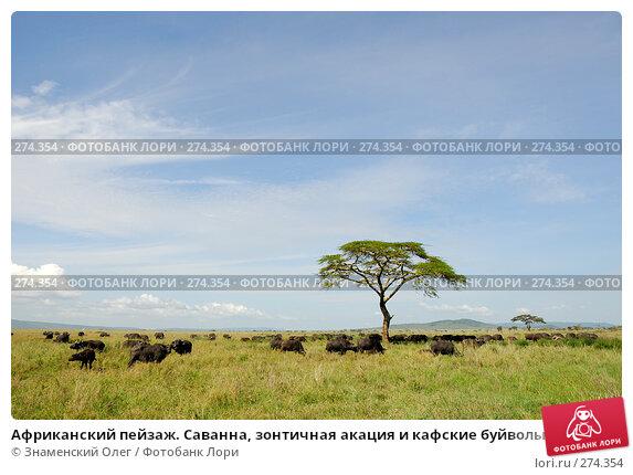Купить «Африканский пейзаж. Саванна, зонтичная акация и кафские буйволы», фото № 274354, снято 23 января 2008 г. (c) Знаменский Олег / Фотобанк Лори