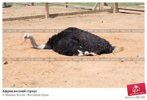 Африканский страус, фото № 296378, снято 13 мая 2008 г. (c) Михаил Котов / Фотобанк Лори
