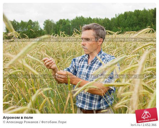 Купить «Агроном в поле», фото № 2652366, снято 10 июля 2011 г. (c) Александр Романов / Фотобанк Лори