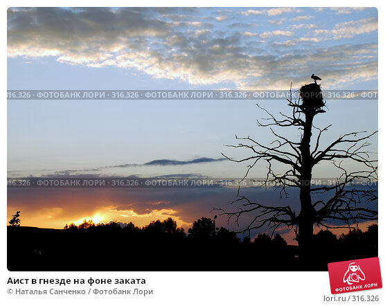Купить «Аист в гнезде на фоне заката», фото № 316326, снято 30 июня 2007 г. (c) Наталья Санченко / Фотобанк Лори