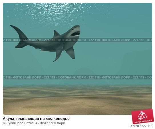 Акула, плавающая на мелководье, иллюстрация № 222118 (c) Лукиянова Наталья / Фотобанк Лори