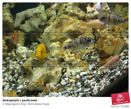Купить «Аквариум с рыбками», фото № 10898, снято 5 мая 2006 г. (c) Маргарита Лир / Фотобанк Лори