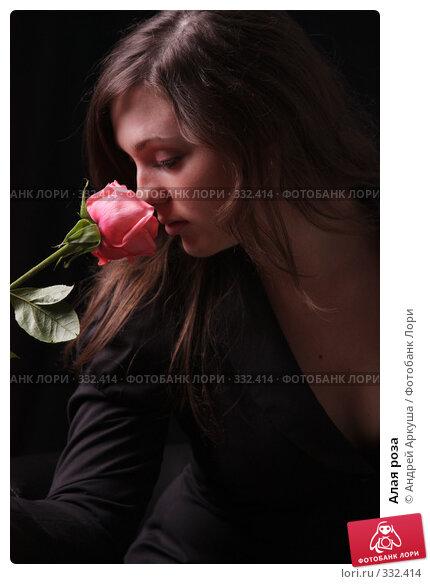Купить «Алая роза», фото № 332414, снято 22 июня 2008 г. (c) Андрей Аркуша / Фотобанк Лори