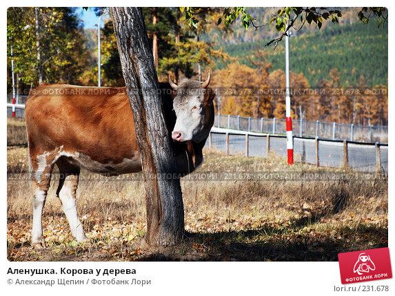 Аленушка. Корова у дерева, эксклюзивное фото № 231678, снято 29 сентября 2007 г. (c) Александр Щепин / Фотобанк Лори