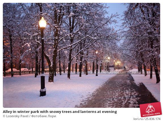 Купить «Alley in winter park with snowy trees and lanterns at evening», фото № 25836174, снято 11 декабря 2014 г. (c) Losevsky Pavel / Фотобанк Лори