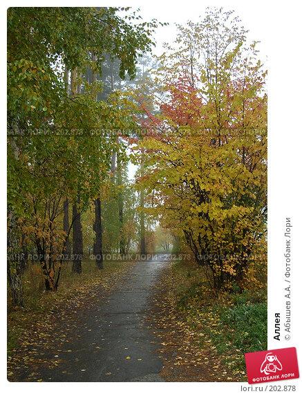 Купить «Аллея», фото № 202878, снято 1 октября 2006 г. (c) Абышев А.А. / Фотобанк Лори