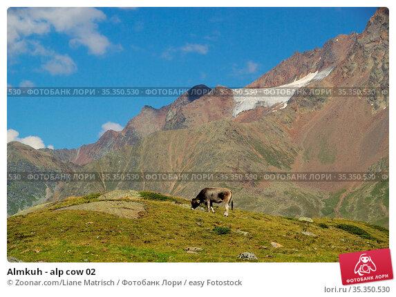 Almkuh - alp cow 02. Стоковое фото, фотограф Zoonar.com/Liane Matrisch / easy Fotostock / Фотобанк Лори