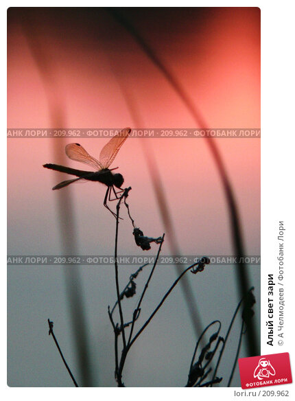 Алый свет зари, фото № 209962, снято 4 августа 2005 г. (c) A Челмодеев / Фотобанк Лори