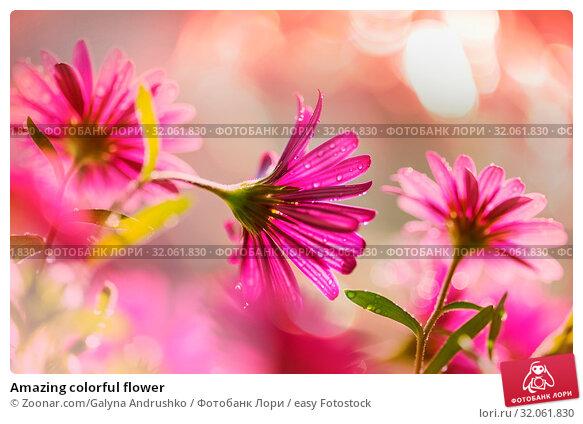 Amazing colorful flower. Стоковое фото, фотограф Zoonar.com/Galyna Andrushko / easy Fotostock / Фотобанк Лори