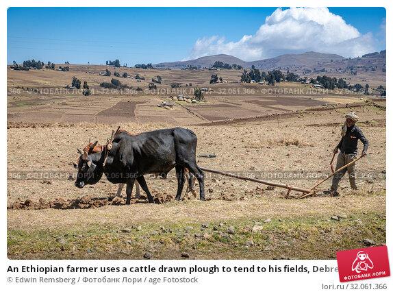 An Ethiopian farmer uses a cattle drawn plough to tend to his fields, Debre Berhan, Ethiopia. (2019 год). Редакционное фото, фотограф Edwin Remsberg / age Fotostock / Фотобанк Лори