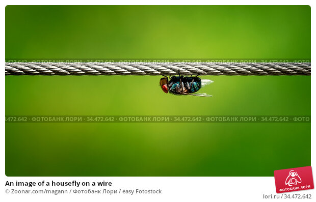 An image of a housefly on a wire. Стоковое фото, фотограф Zoonar.com/magann / easy Fotostock / Фотобанк Лори