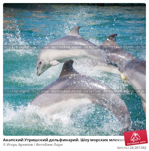 Анапский Утришский дельфинарий. Шоу морских млекопитающих (2015 год). Стоковое фото, фотограф Игорь Архипов / Фотобанк Лори
