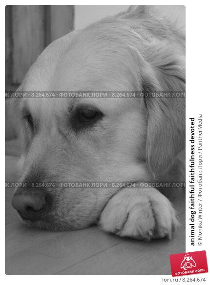 essay domestic animal dog