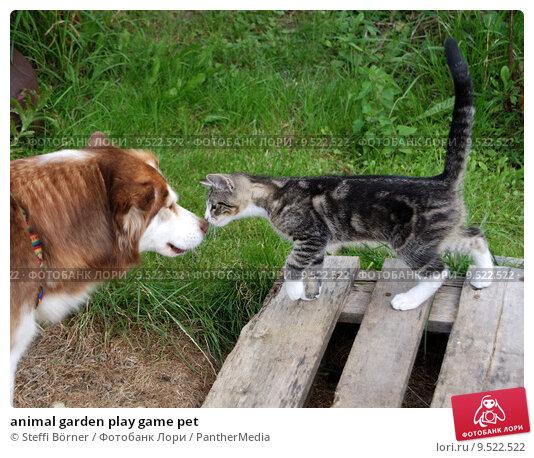 Купить «animal garden play game pet», фото № 9522522, снято 17 августа 2019 г. (c) PantherMedia / Фотобанк Лори