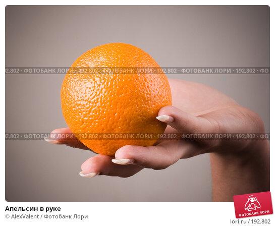 Апельсин в руке, фото № 192802, снято 18 января 2017 г. (c) AlexValent / Фотобанк Лори