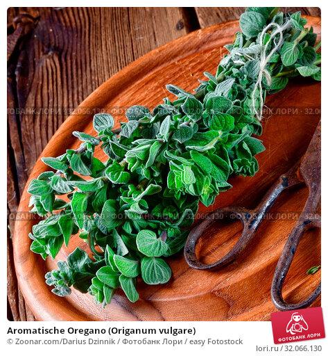 Aromatische Oregano (Origanum vulgare) Стоковое фото, фотограф Zoonar.com/Darius Dzinnik / easy Fotostock / Фотобанк Лори