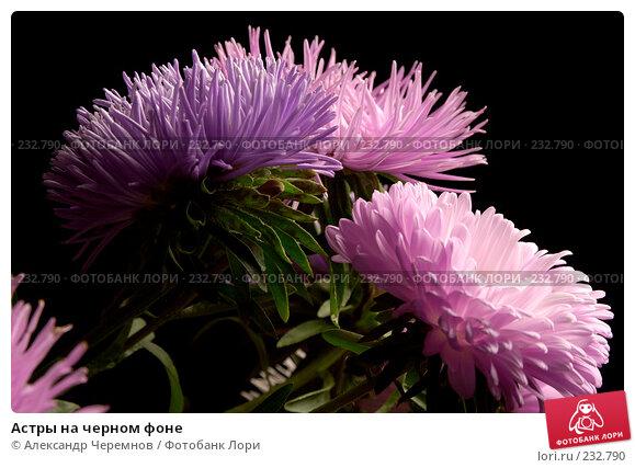 Купить «Астры на черном фоне», фото № 232790, снято 10 сентября 2002 г. (c) Александр Черемнов / Фотобанк Лори