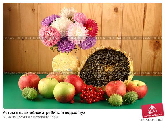 Астры в вазе, яблоки, рябина и подсолнух, фото № 313466, снято 4 сентября 2007 г. (c) Елена Блохина / Фотобанк Лори